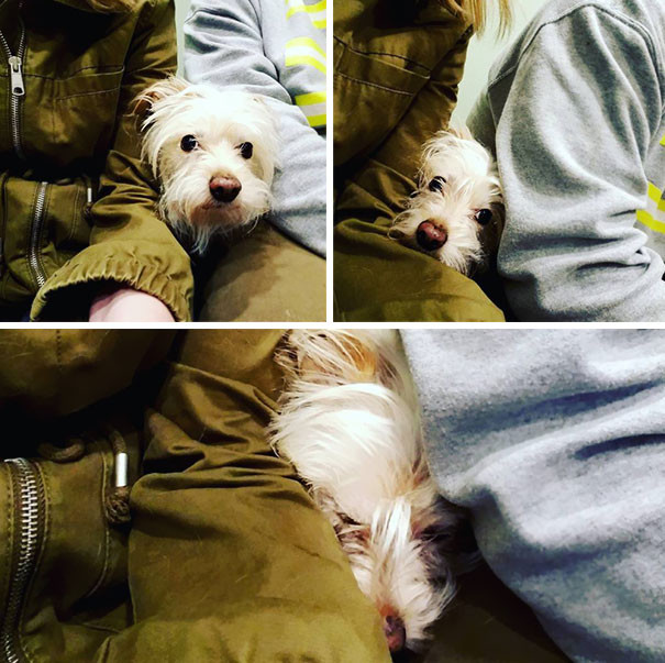 funny-dogs-vet-clinic-64-5a3a6fa20a4cf__605