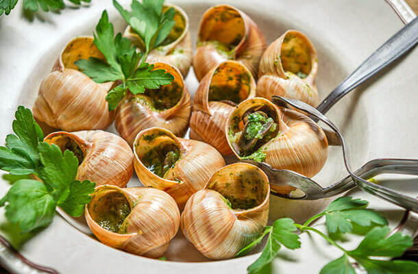 escargot-apple-snails-nutrition