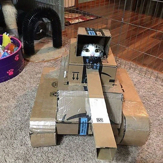 quarantined-owners-build-cardboard-cat-tanks-5eaa7c038fc4e__700