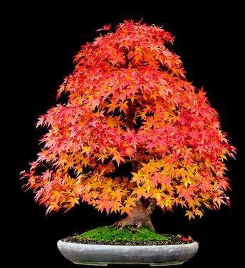 amazing-bonsai-trees-24-5710f78e7b4e5__700 (1)