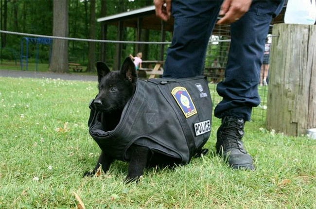 adorable-puppies-police-training-2-5f465958541e9__700
