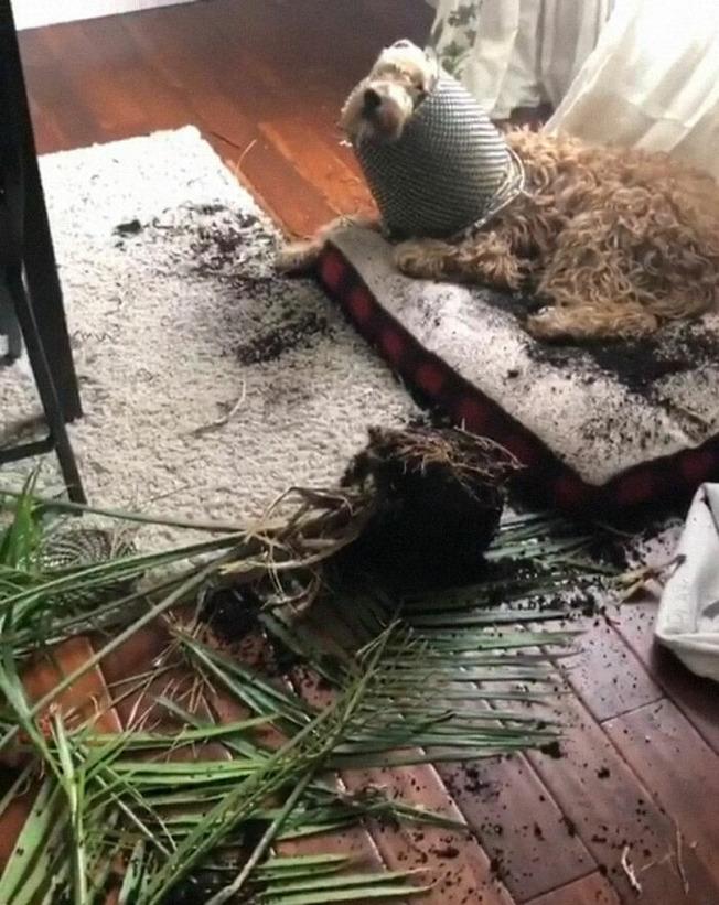 pets-destroying-things-510-603c9b077e379__700