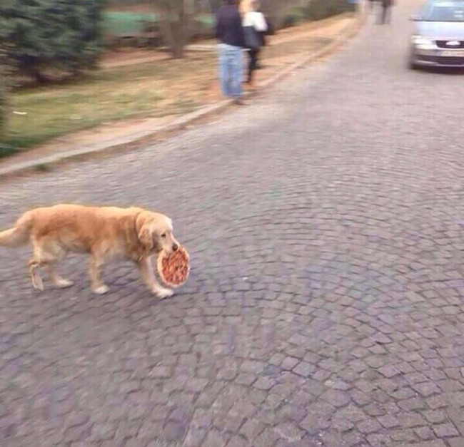 cats-dogs-stealing-food-5-5f4cb80ad6fde__700