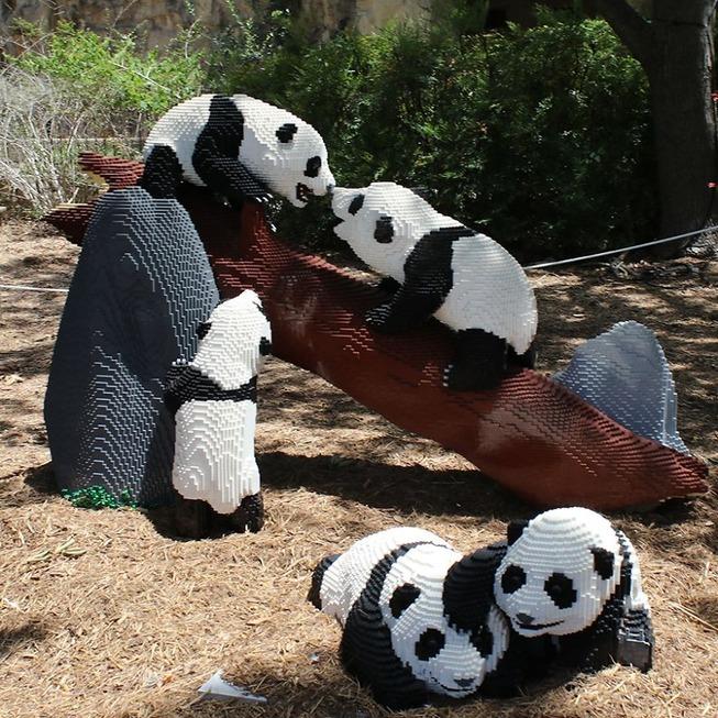 This-zoo-created-life-size-panda-replicas-using-Lego