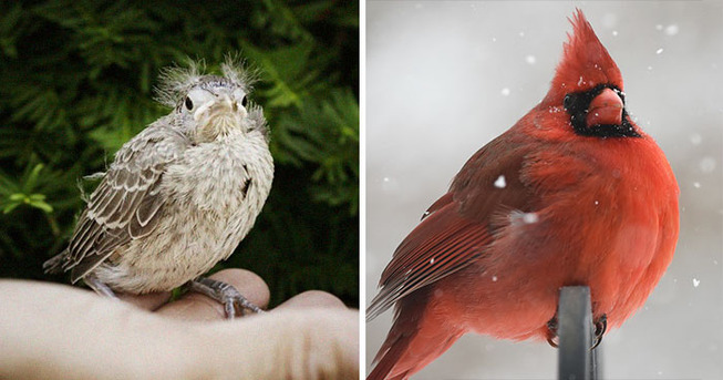 baby-adult-birds-comparison-coverimage