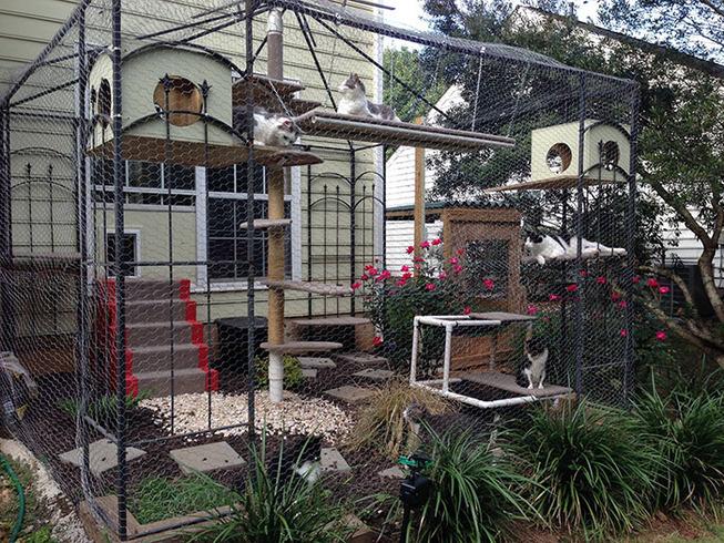 catios-cat-patios-outdoor-enclosures-38-5cf7ca87b6d98__700