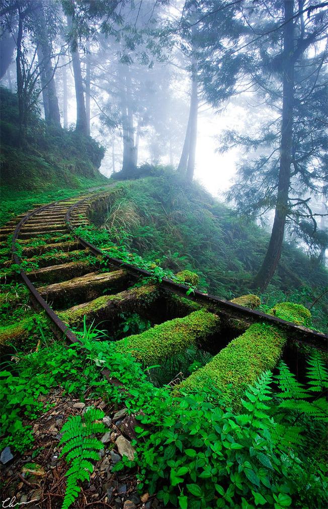 nature-reclaiming-civilization-1-603ce322d7f48__700