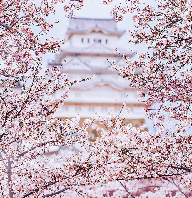 Lost-in-Kyoto-and-the-sakura-blossom-59101a4e098f7__880
