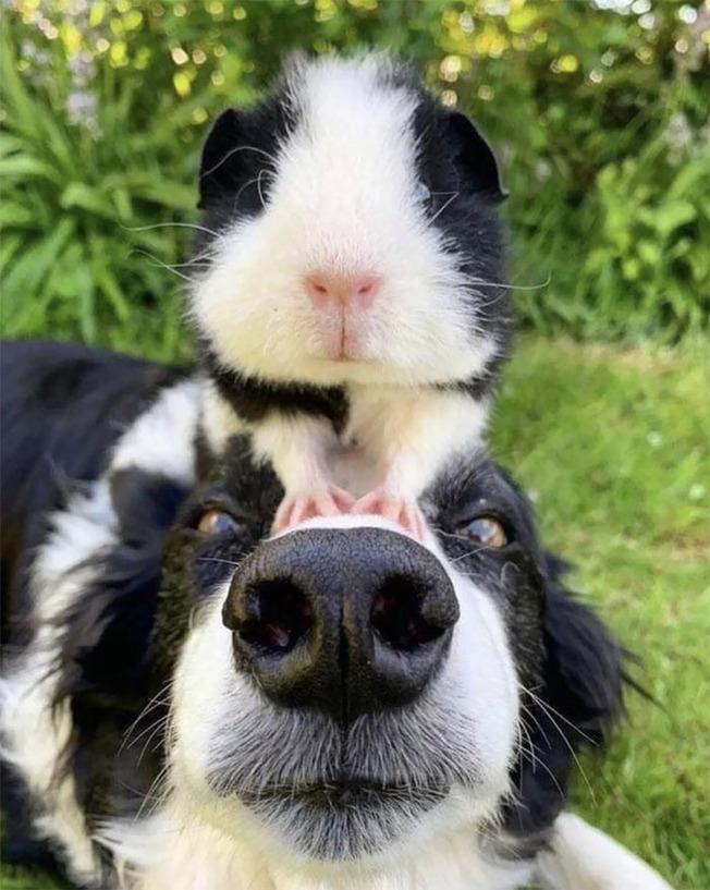 cute-similar-animals-1-611520bc1dd7d__700