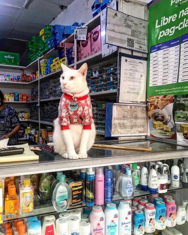 Cute Photos Of Bodega Cats