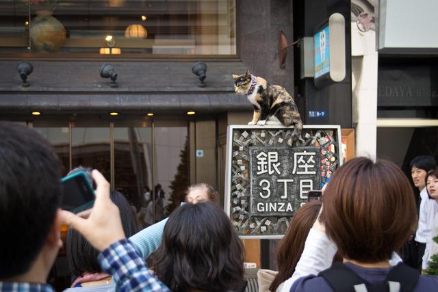 Ginza_Cat_(7331687940) (1)