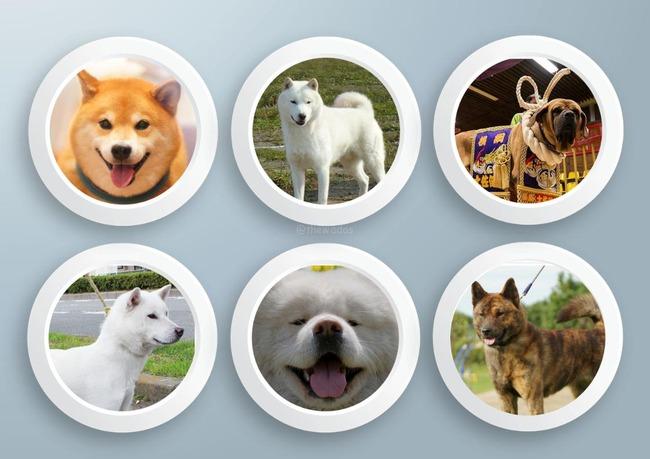 japanese-dog-breeds_image