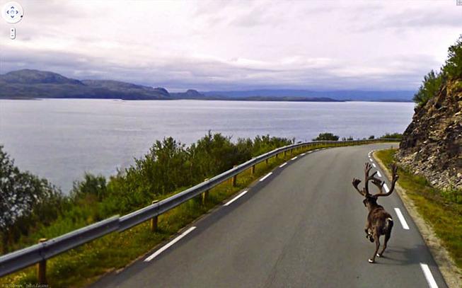 google-street-animals-5d2441cb083d6__700