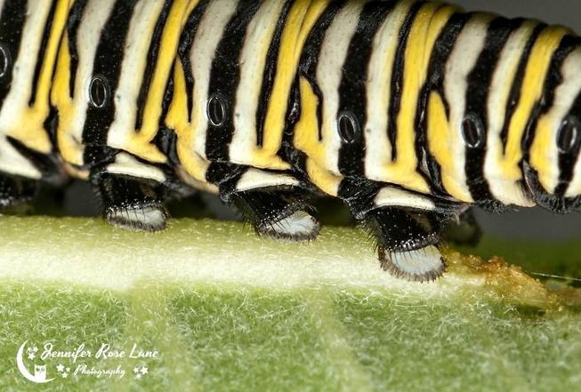 caterpillar-feet-22-5ef0a1993eb7e__700