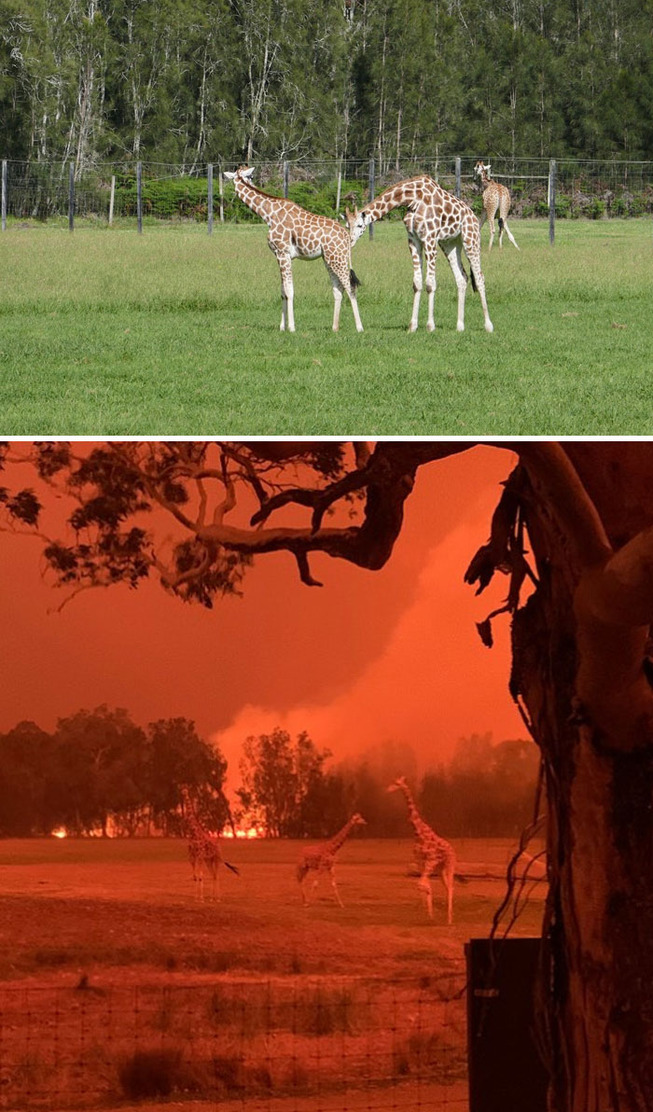 australia-bushfires-before-after-photos-22-5e159968b2b49__700