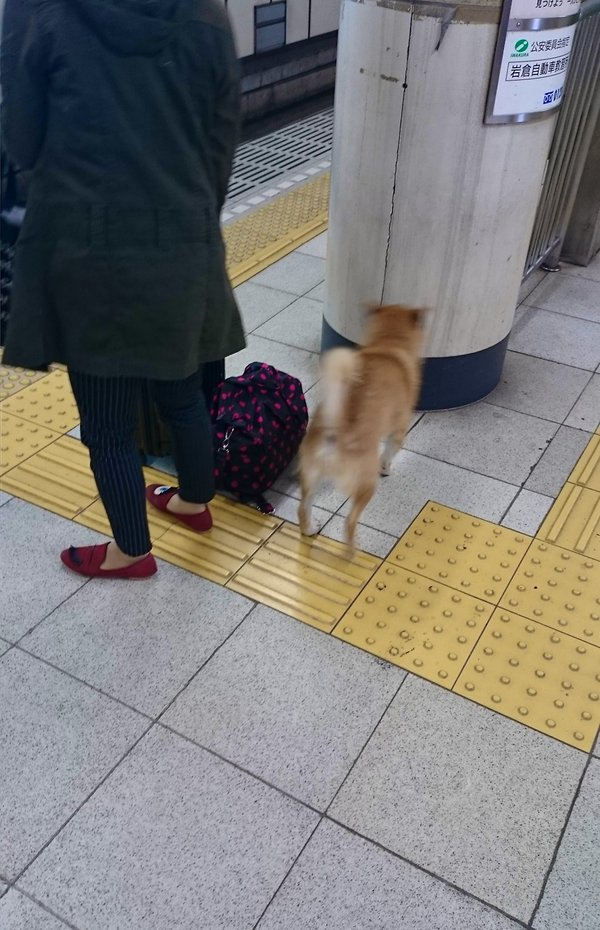 inu_kaisatsu3