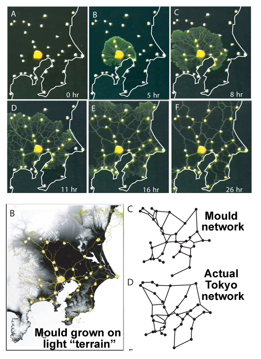 粘菌 海外の反応 東京 鉄道網