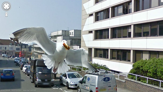 google-street-animals-5d2441d08ec01__700