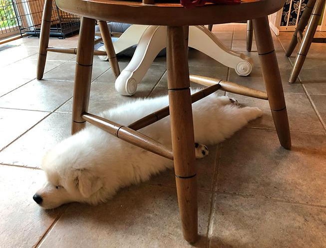 funny-dog-sleeping-positions-56-5d5f92f7083b9__700