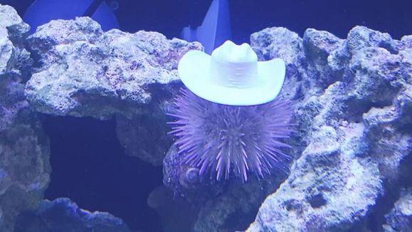 sea-urchins-tiny-hats-5fbbaeb5b6587__700