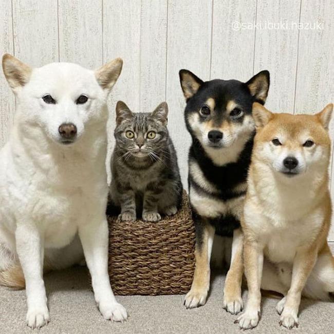 cat-thinks-she-is-dog-saki-ibuki-hazuki-3-5f646cf937e39__700