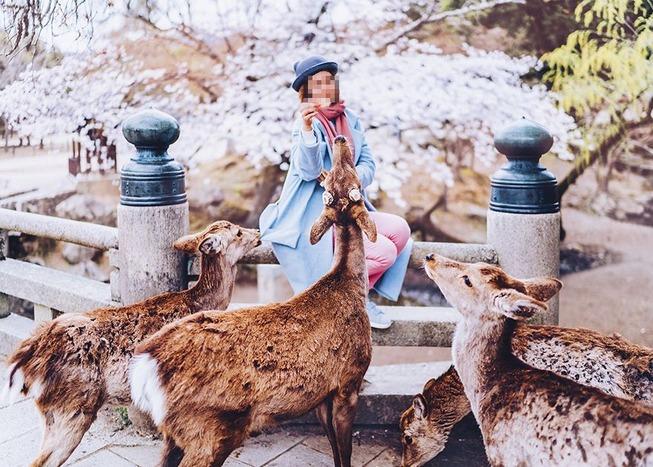 Lost-in-Kyoto-and-the-sakura-blossom-59101a6650e5d__880