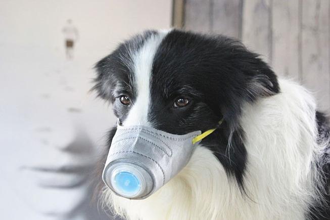 dog-masks-coronavirus-china-8-5e33f624b670f__700