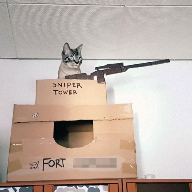 cats-cardboard-forts-206-5f2d199eb4cf3__700