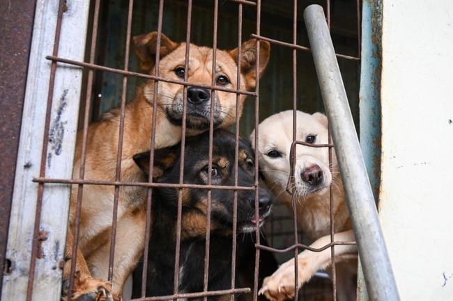 South-Korean-dog-meat-farms-closing-as-attitudes-change
