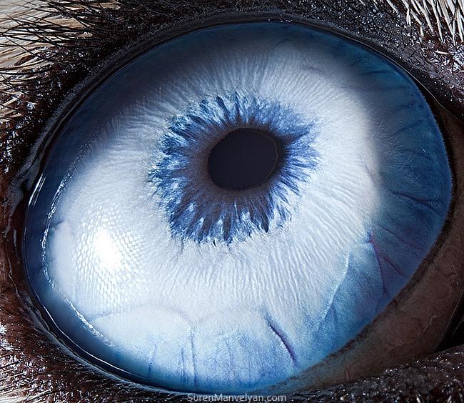 animal-eyes-photography-suren-manvelyan-43-5f4e19571b038__700