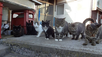 these-two-japanese-islands-have-the-cutest-cat-infestation-6