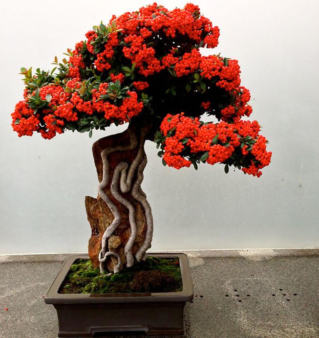 amazing-bonsai-trees-6-5710e79b9f76b__700