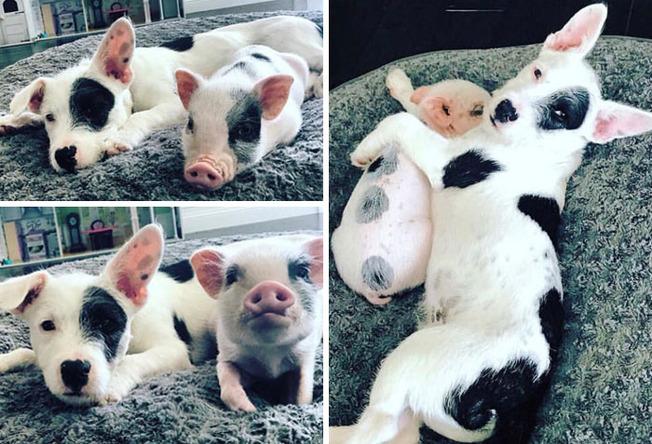 cute-similar-animals-202-611ca9e9ba567__700