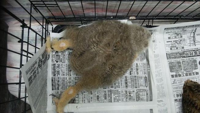 sleeping-baby-owls-face-down-12-5ef2f72c80f42__700