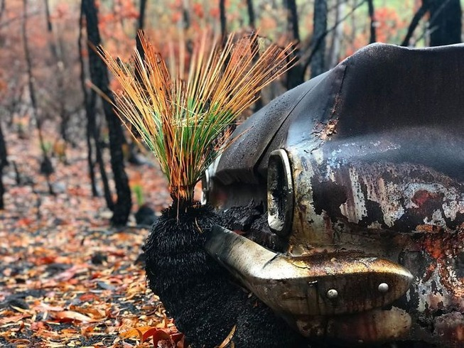 australia-forests-after-wildfires-photo-4-5e313ddd1c4e6__700