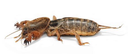 24 - 24 These are mole crickets They are terrifying
