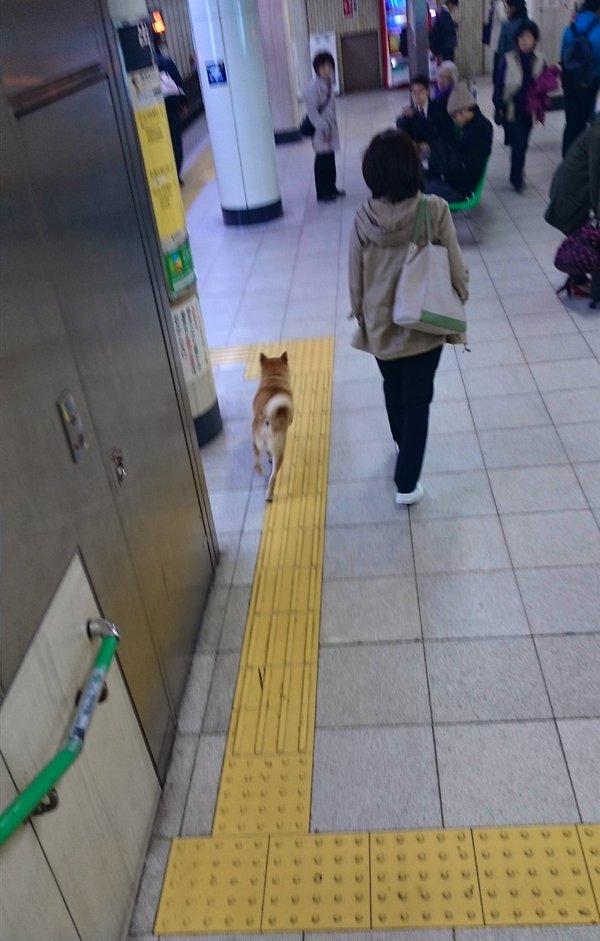 inu_kaisatsu2