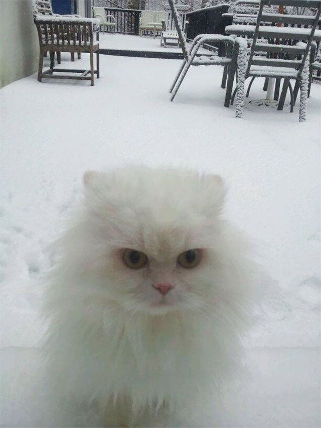 funny-animals-first-snow-cats-dogs-113-5a549e1fc9196__700