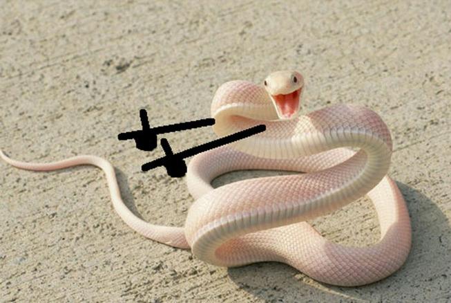 funny-snakes-arms-doodle-82-5d8221e0336af__700