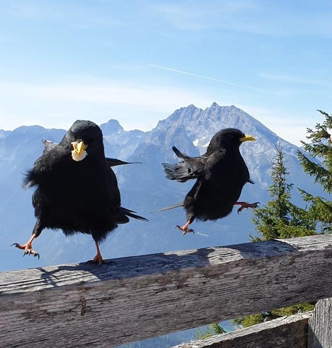 funny-crappy-wildlife-photography-300-5eb52ba049b5f__700