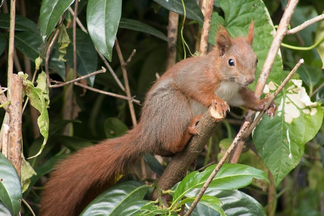 squirrel-5309341_960_720