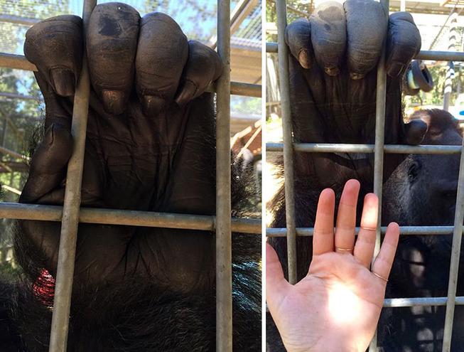 animal-size-comparison-24-5f1ecb3a762ad__700