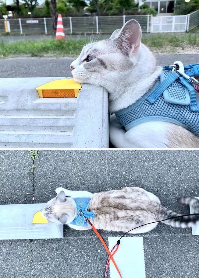 cats-sleeping-parking-lot-curves-5f215d9cd5436__700