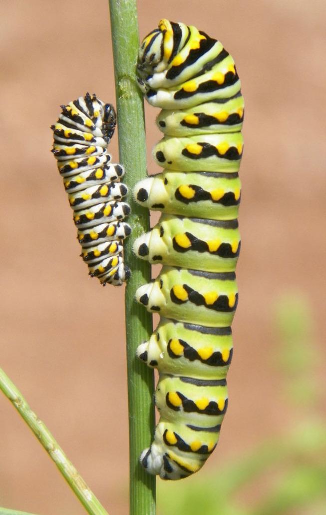 caterpillar-feets-6-5ef0c01d3b3f9__700