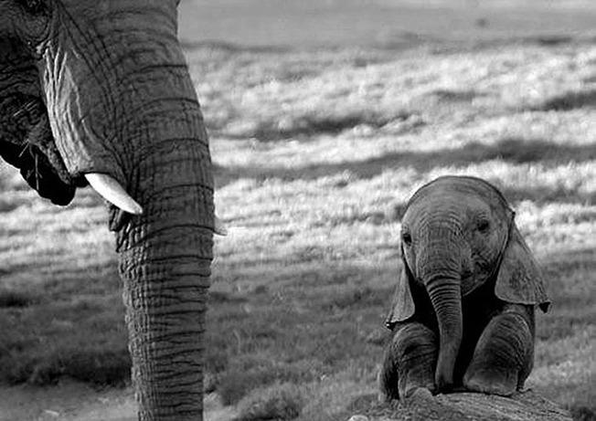 adorable-baby-animals-23-614d7f448e8bc__700