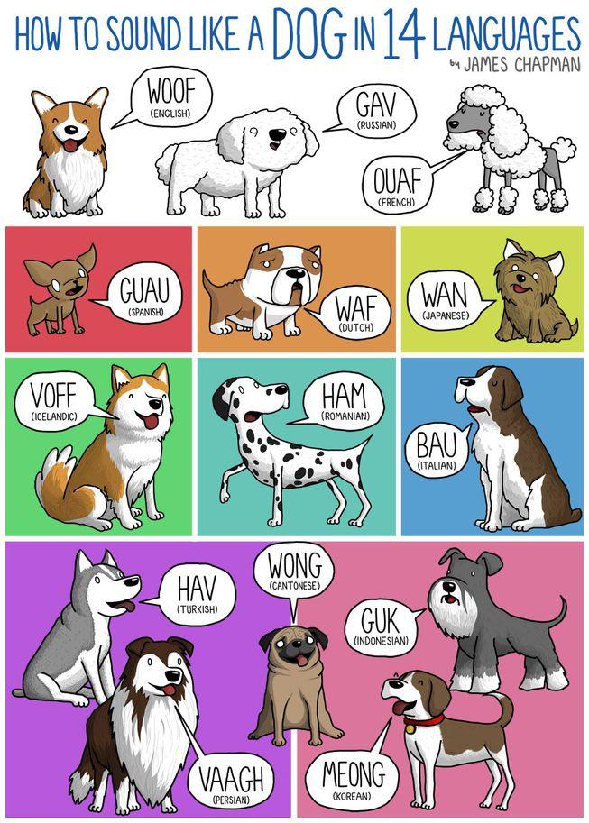 dogs.jpg.653x0_q80_crop-smart