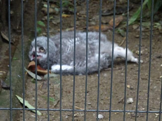 sleeping-baby-owls-face-down-21-5ef2fbe7b1cc6__700