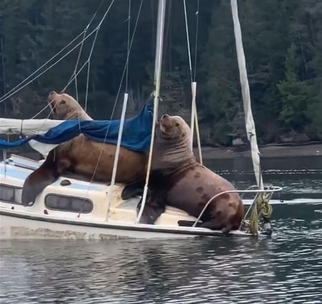 sea-lions-boat-10-5e0d9d4a51008__700