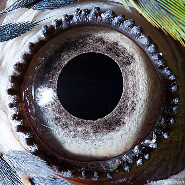 animal-eyes-photography-suren-manvelyan-23-5f4e1920565bc__700
