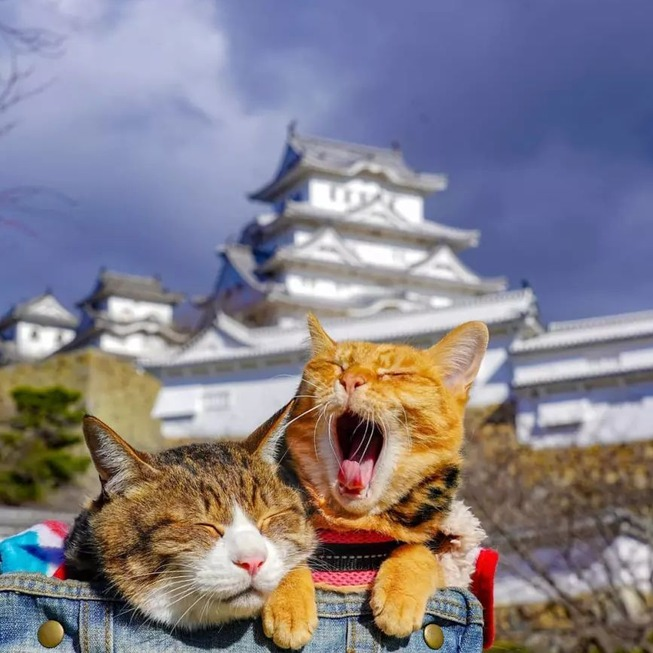 traveling-cats-japan
